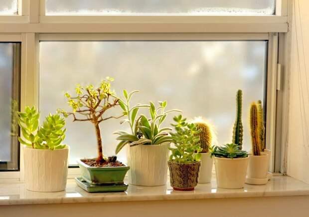 Как выращивать кактусы