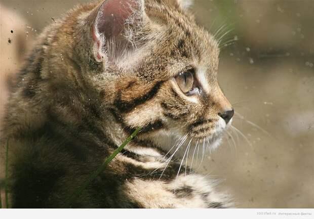 про кошек_9 жизней