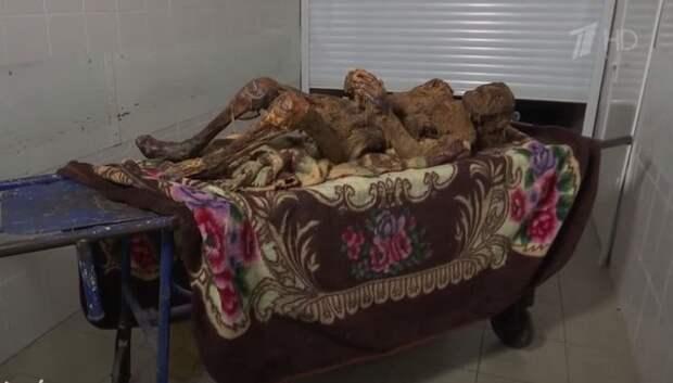 Продавец секс-шопа три года солил тело матери