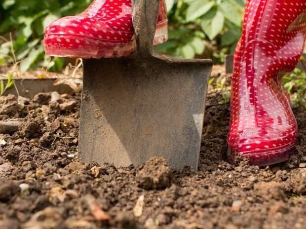 Как вернуть почве плодородие
