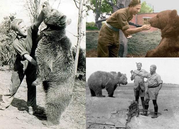 Поразительная история медведя, воевавшего во Второй мировой войне
