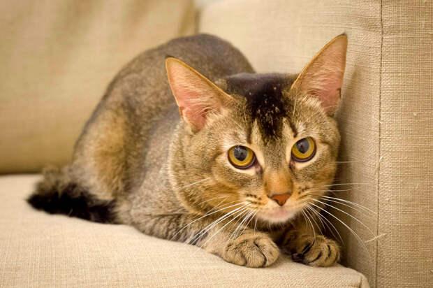 Пятничный кот Платон: пусть он больше не боится!