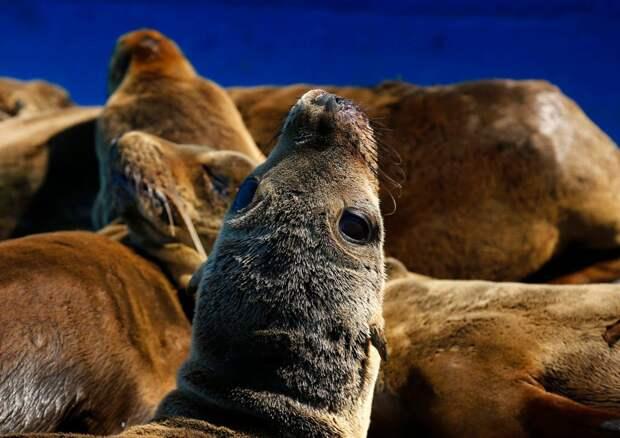 морские львы нуждаются в помощи-12