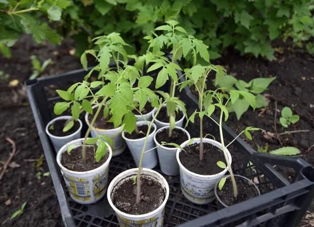 Дефицит распускается по весне: как пандемия сказалась на рынке сезонных товаров для сада
