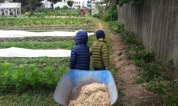 В Сан-Франциско открылась инновационная школа, где детей учат выращивать себе еду