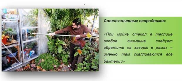 Осенние работы в теплице: подготовка почвы к зиме и обработка каркаса