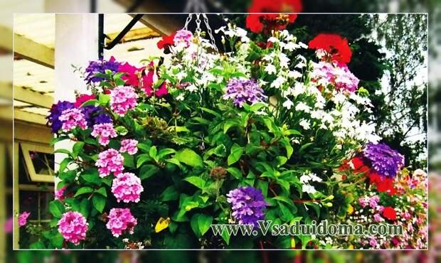 Цветы в подвесной корзине своими руками — какие выбрать и посадить и как оформить