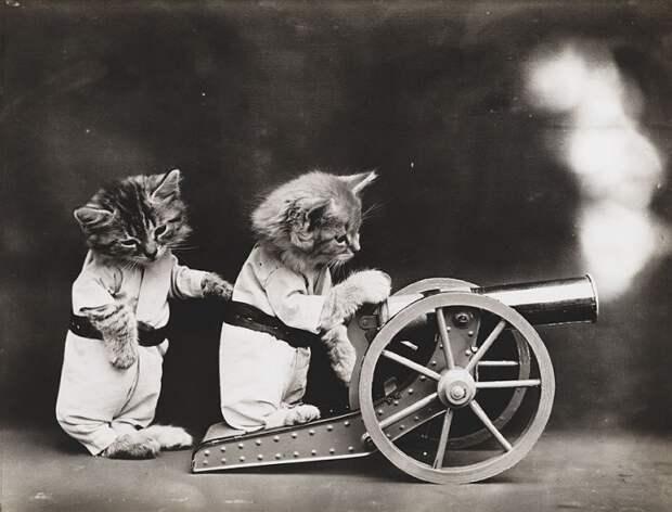 Столетние котики в гостях у story