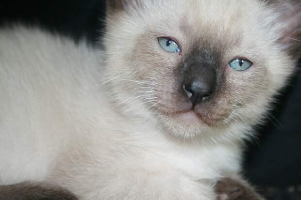 Хозяйка принесла бездомного котёнка на ночь, чтобы утром отнести в приют. А утром поняла, что котик останется у неё навсегда