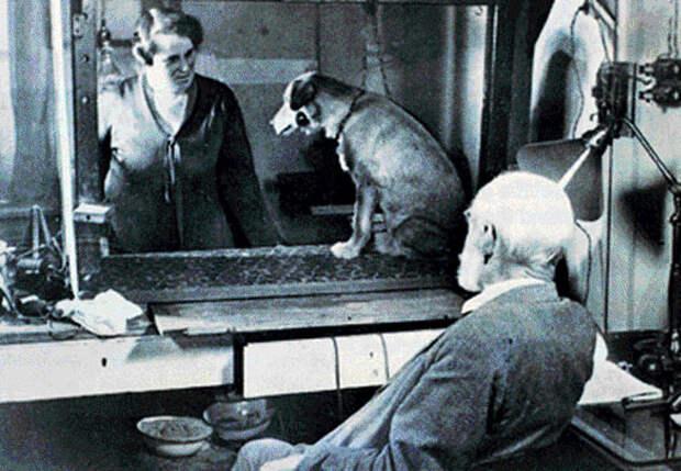 Эксперименты академика Павлова: самые шокирующие факты