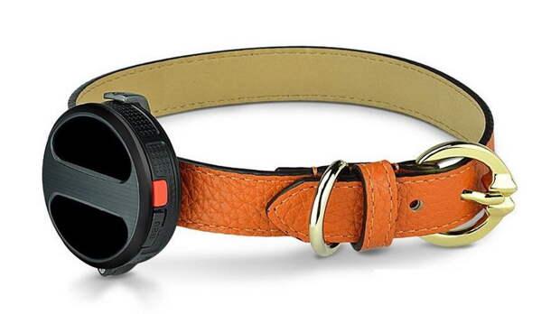 haier-smart-dog-collar-900x600