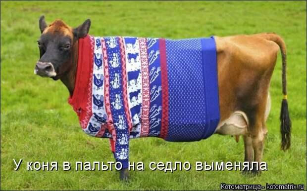 Котоматрица: У коня в пальто на седло выменяла