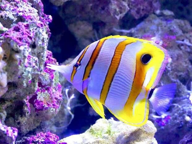 Красоты Большого Барьерного рифа