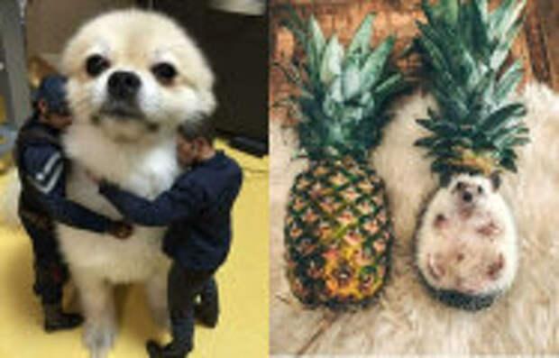 Фотография: 15 странных и забавных фотографии животных, которым весьма трудно подобрать объяснение