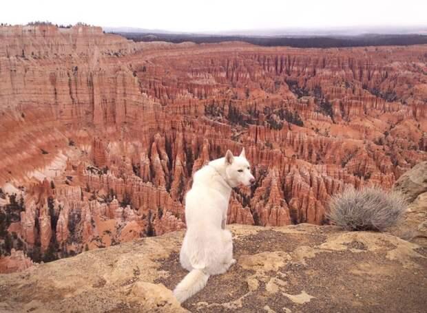путешествие по США Джона Шторца и его собаки Вольфа