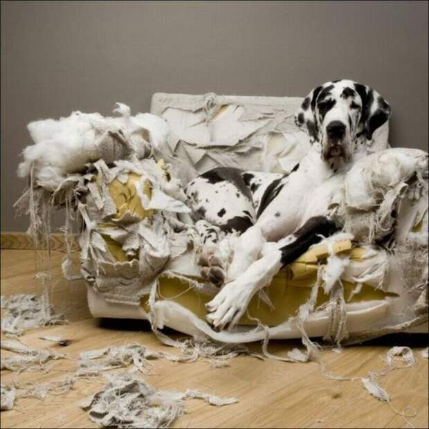 Собака всё рвёт и переворачивает вверх дном: как понять и унять хулиганку?