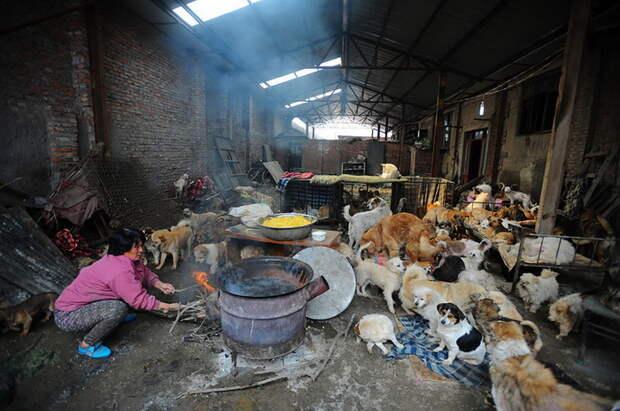Приют отважной китаянки