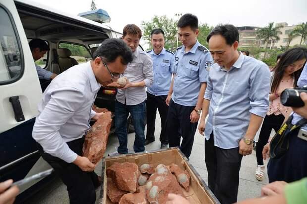 В Китае рабочие обнаружили крупную кладку яиц динозавра