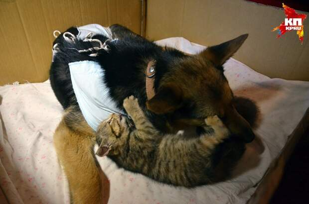 Невероятная история спасения брошенных котят бродячей собакой котята, собака, спасение