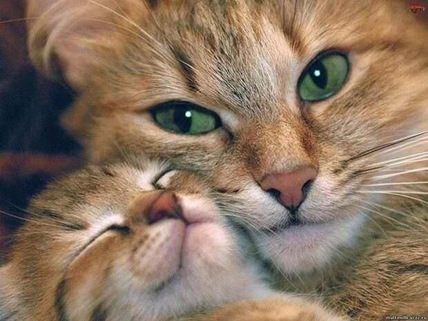 Зачем кошка отгрызает усы котятам?