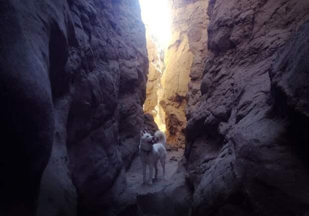 путешествие по США Джона Шторца и его собаки Вольфа (22)