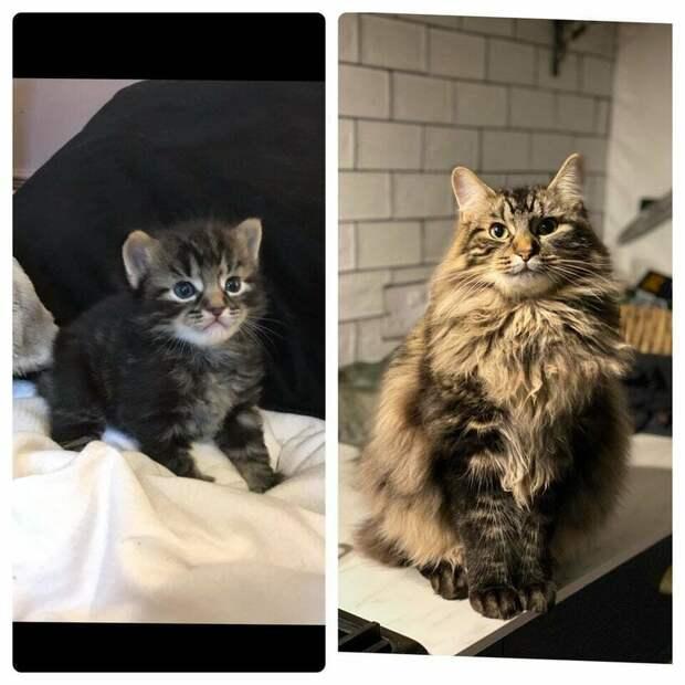 10 человек сравнили фото своих котов сейчас и в детстве