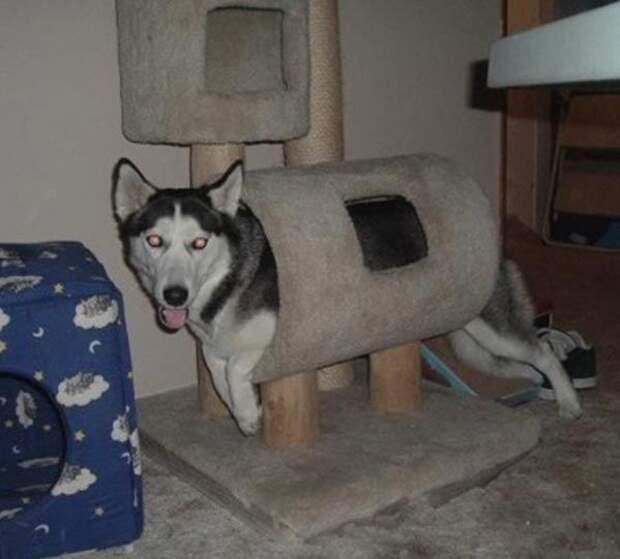 На самом деле это кот собака, юмор