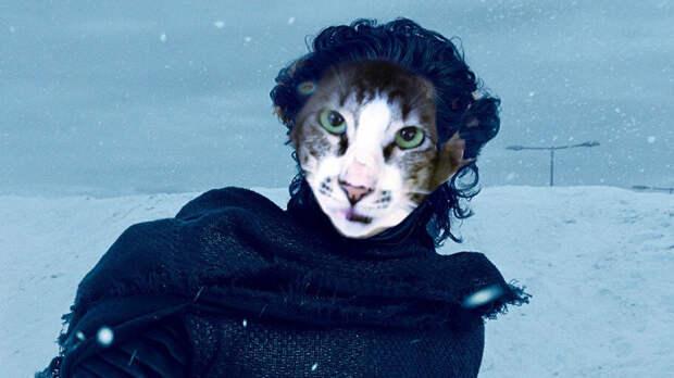 """Кошачий двойник злодея из """"Звездных войн"""" наконец обрел новую семью животные, звездные войны, кайло рен, кот"""