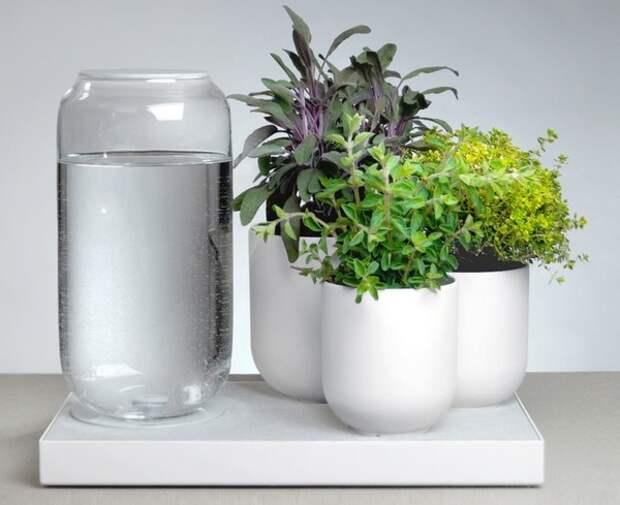 Приспособления для полива цветов во время отпуска