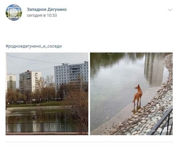 Фото дня: Дегунинский пруд в прошлом