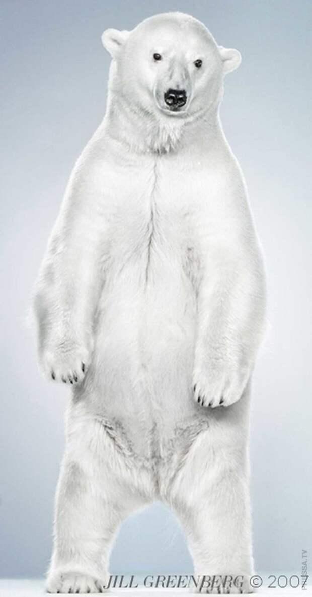 Необычные портреты медведей