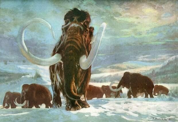 «Их всегда добывали ради бивней»  Что могут рассказать мамонты о заселении крайнего севера первыми людьми