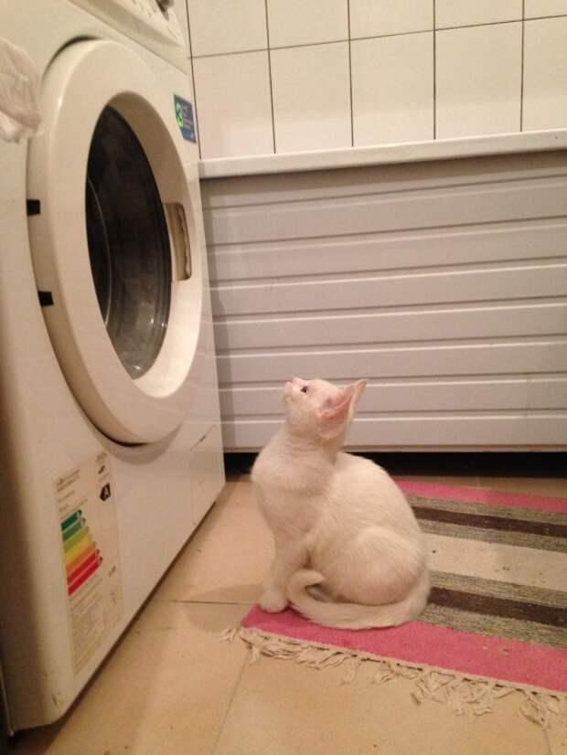Пусть купается белье, а у кошек для мытья - лапки!