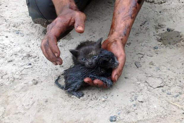 Житель Нефтеюганска спас двух котят из нефти