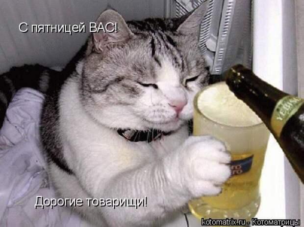 Пятничная котоматрица