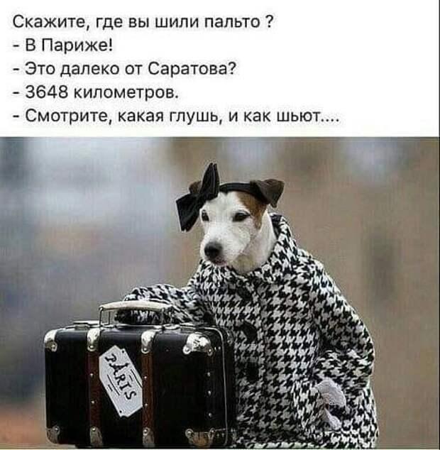 Действительно лучший друг человека - собака.  Не верите?...