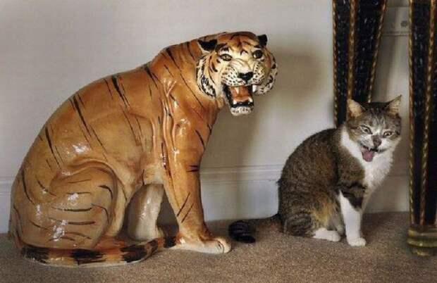 1. Кот-подражатель курьезные, фото, юмор