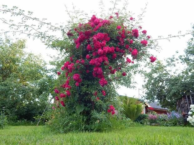 Дачно-садовые идеи