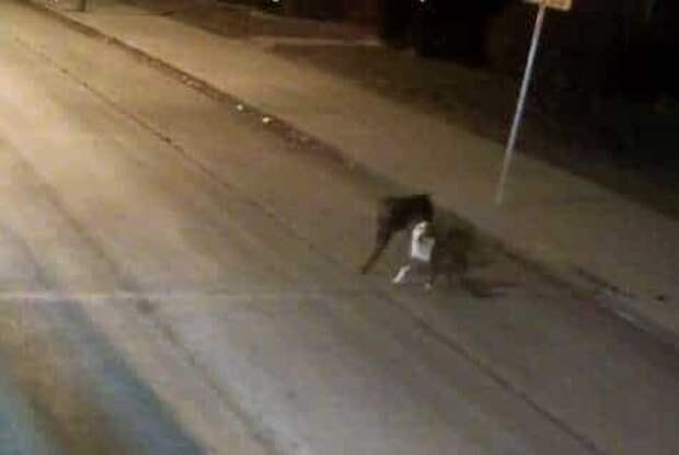 На обочине дороги тряслись от холода две собаки. Они сбежали из дома и заблудились…