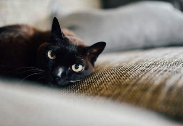 Проводники в мир иной животные, коты, факты