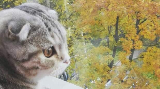Котенка принесли в клинику, чтобы усыпить, но девушка уговорила хозяев отдать его ей