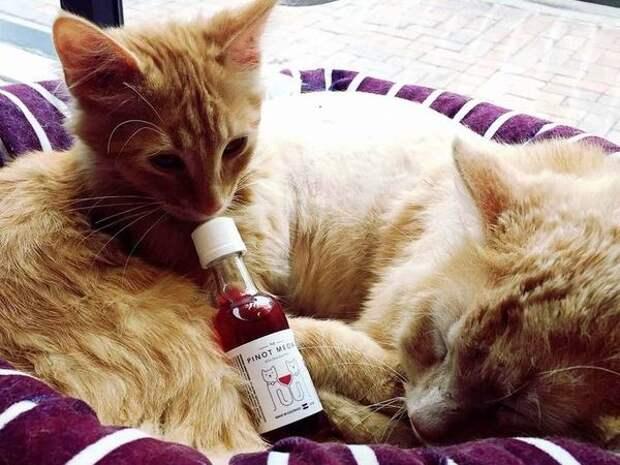 Вино для кошек, или Почему вам больше никогда не придётся пить в одиночку