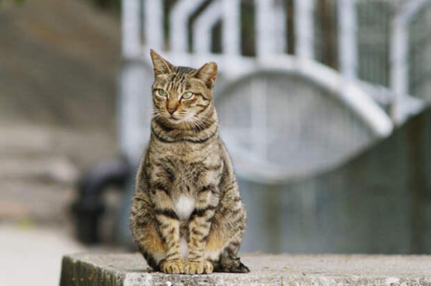 Кошки животные, факты