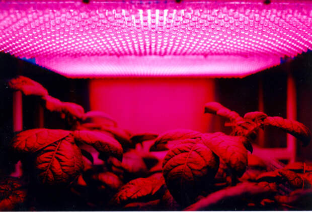 led_panel_and_plants