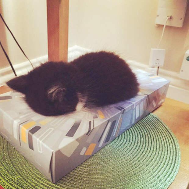 2. Спит в коробке для салфеток котенок, сон