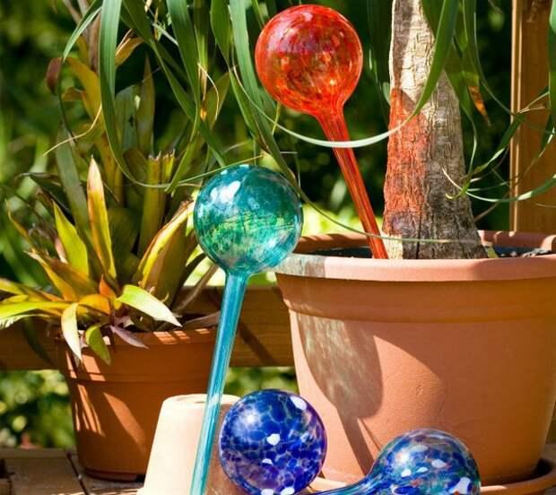 Колбы для автоматического полива цветов