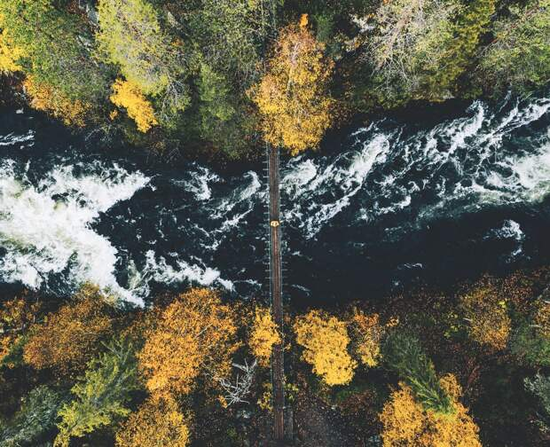 8 самых красивых лесов Европы, в которых стоит побывать, пока их не вырубили