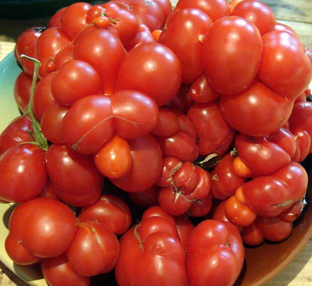 Ребристые томаты – самые вкусные для салатов
