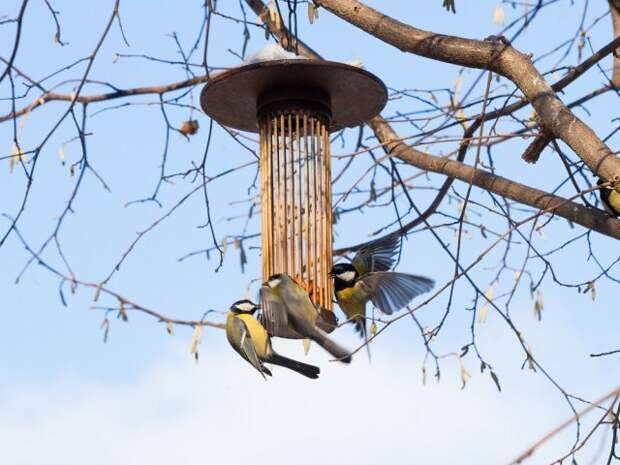 что можно и что нельзя давать птицам зимой