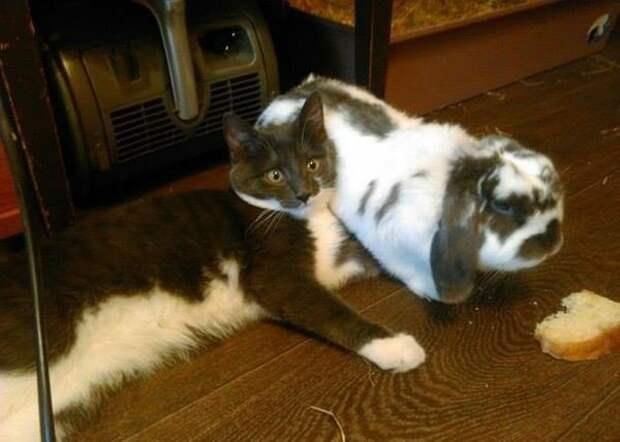 Пост людителям кошаков коты, прикол